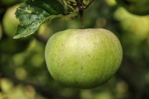 Apfel, Leidenschaft und Coaching