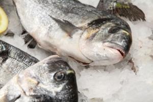 Kundenbindung und Service im Fischrestaurant