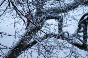 Winter in Eilenburg - Pflege und Gesundheit