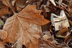 Herbstlaub - Auf dem Weg zur Arbeitssucht?