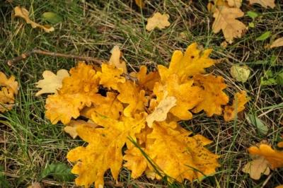 Herbst im Schlosspark zu Machern