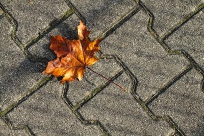Herbst in der Stadt - Starke Führung oder Führungsstarre?