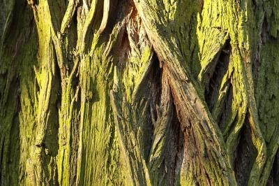 Alt wie ein Baum klappt bei Projekten mit Digitalisierungsfokus jetzt nicht so gut!