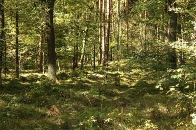 Gesundheit durch und mit dem Wald! Nicht nur in Leipzig oder Eilenburg