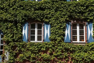 Ueckermünde - Hausfassade mit Fenstern und Idylle